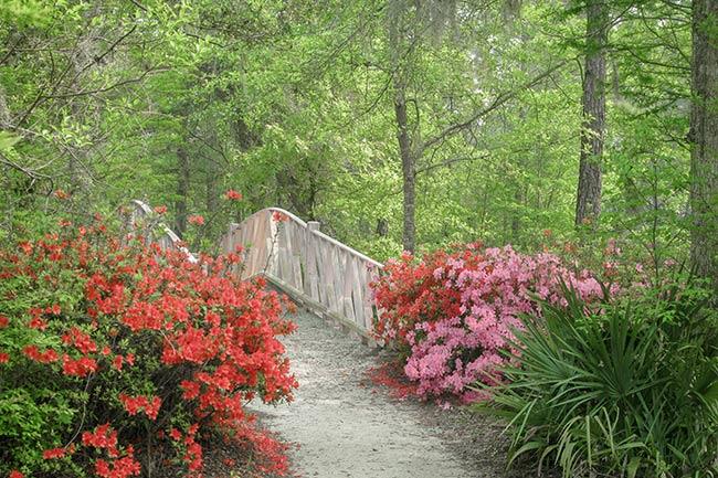 Cypress Gardens Azalea Trail