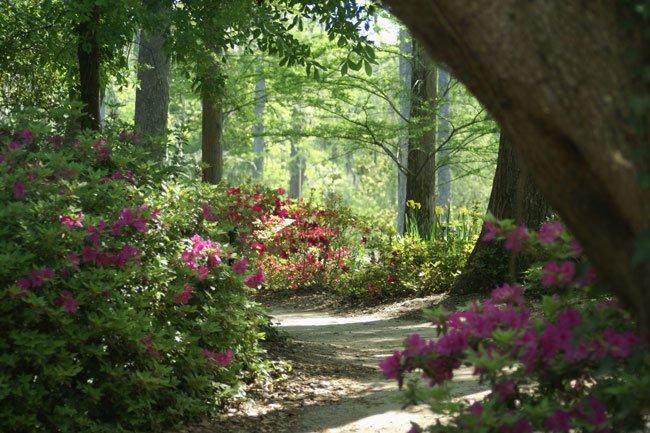 Cypress Gardens Berkeley County