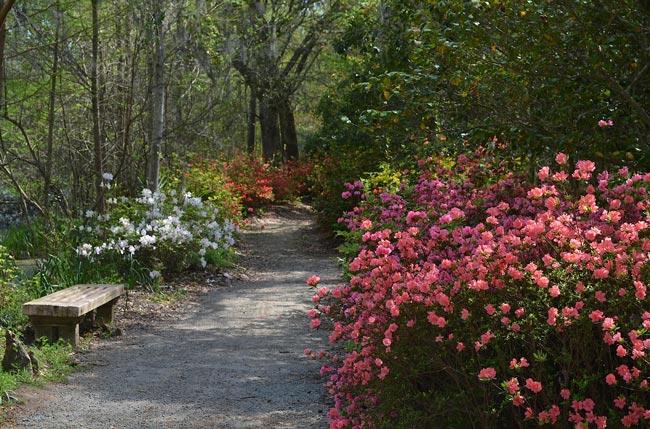 Cypress Gardens Path