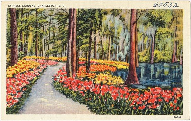 Cypress Gardens Postcard