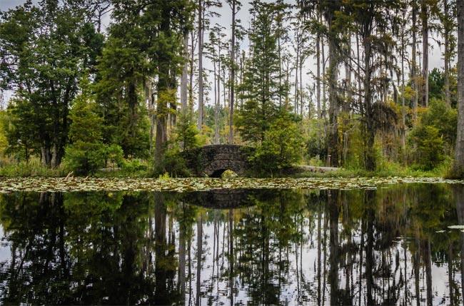 Cypress Garden Foam Bridge