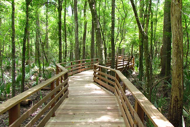 Francis Beidler Forest Boardwalk