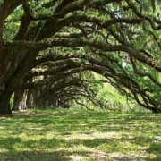 Dixie Plantation