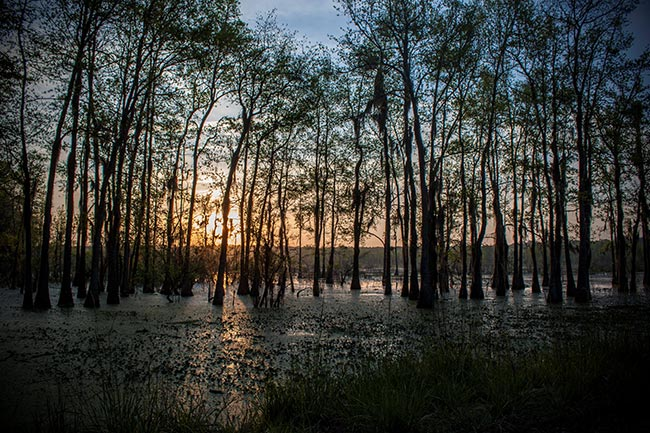 Donnelley WMA Swamp Sunrise