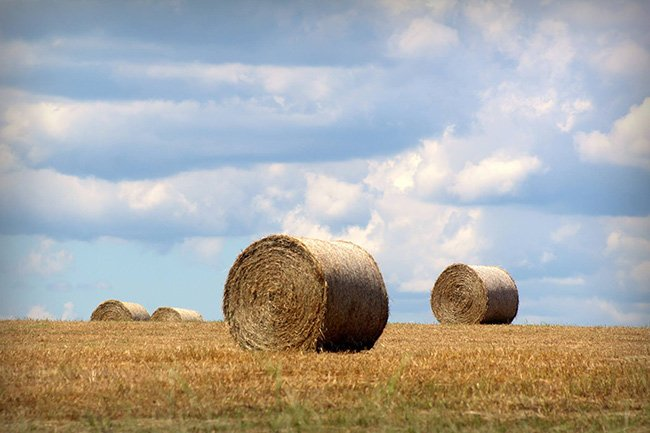 Edgefield County Haybails