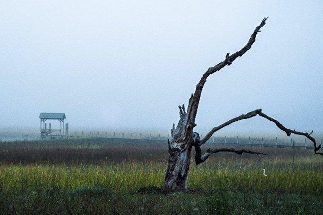 Edisto Island Fog