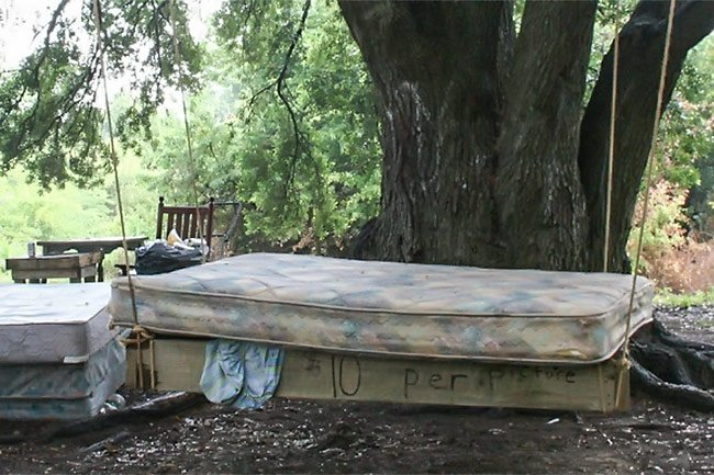 Edisto Island Mattress Tree