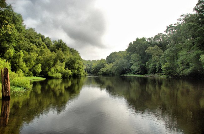 Edisto River at Mars Old Field