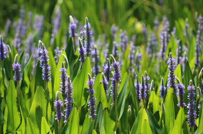 Edisto State Park Flowers