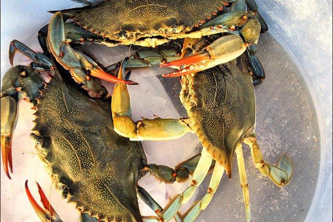 Edisto Island Crabs
