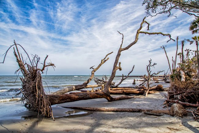 Erosion at Hunting Island State Park
