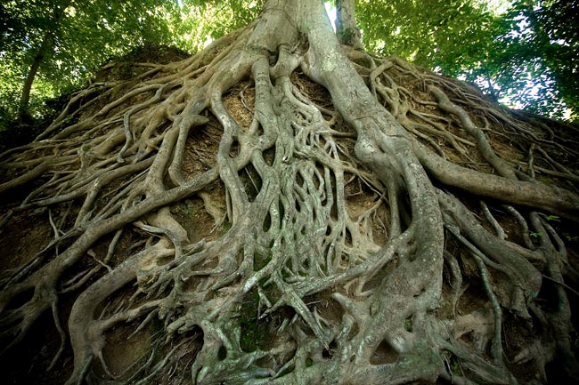 Falls Park Tree