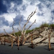 Folly Beach County Park