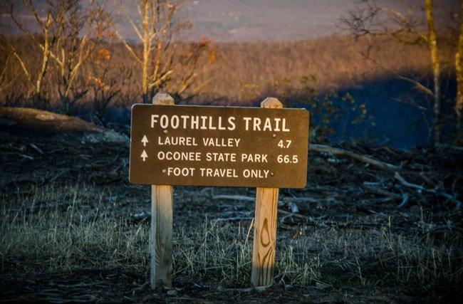 Foothills Trail Sassafras