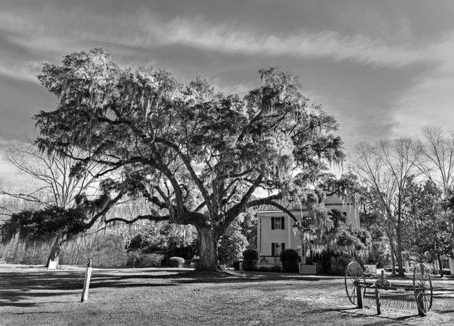 Frampton Plantation