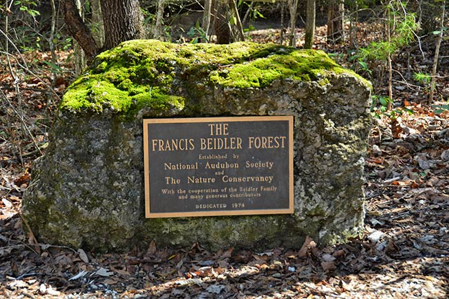 Francis Beidler Forest