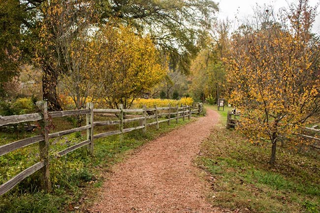 Glendale Shoals Preserve Path