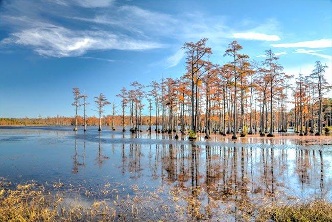 Goodale Park Cypress Pond