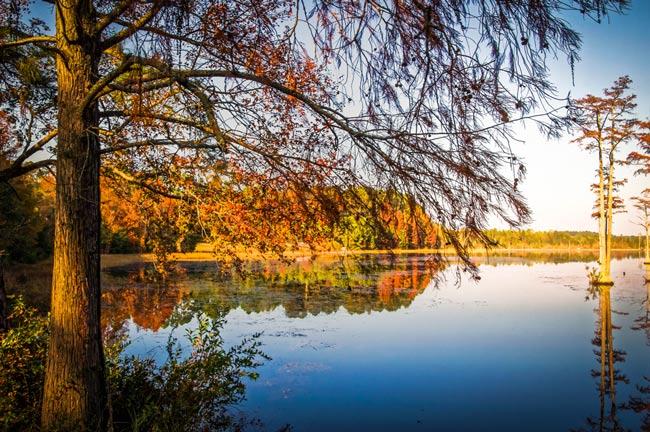 Goodale Trees Pond