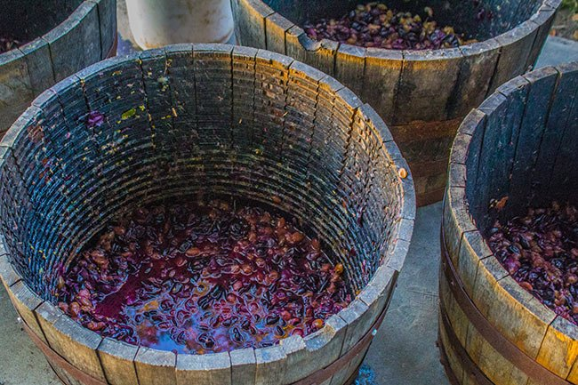 Deepwater Vineyard