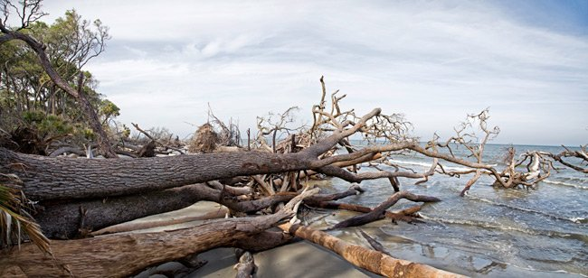 Graveyard Beach - Panorama of Hunting Island