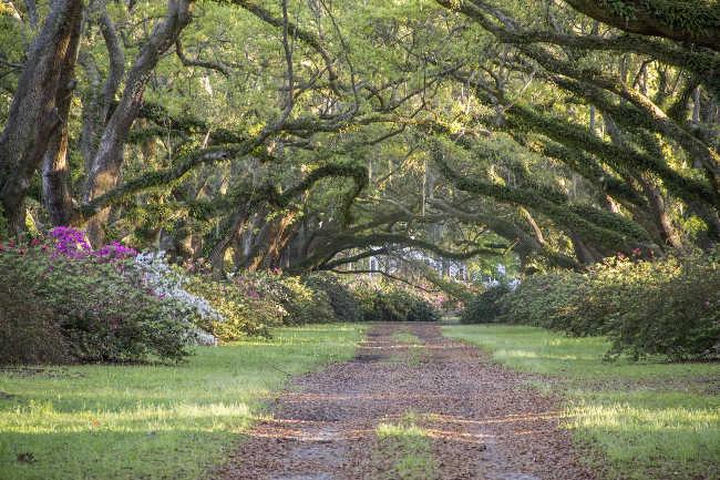 Hillsborough Plantation