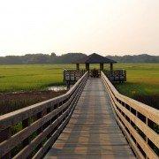 Hilton Head Marsh