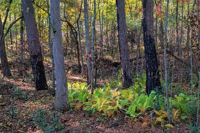 Hitchcock Woods Aiken