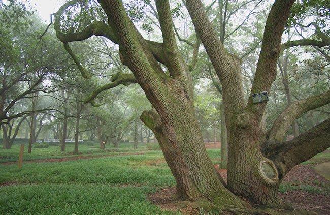 Hopeland Gardens Oak