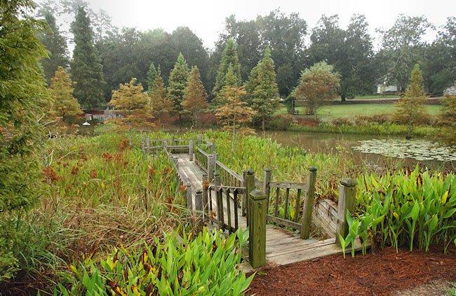 Hopelands Garden Boardwalk