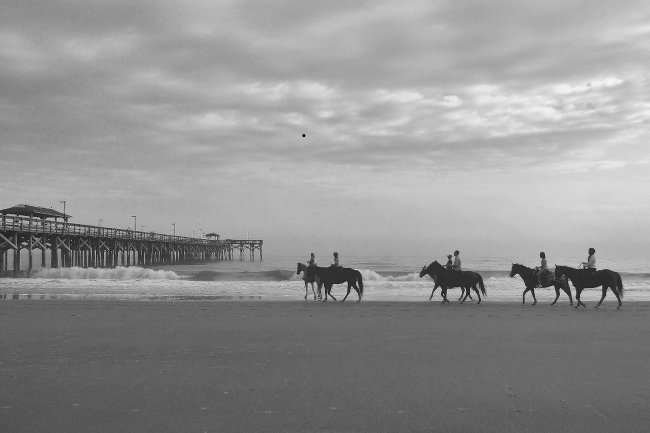 Horses at the Springmaid Pier Myrtle Beach