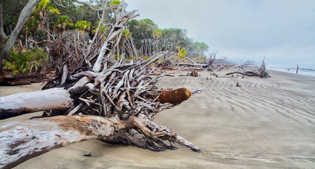 Hunting Island Maritime Forest