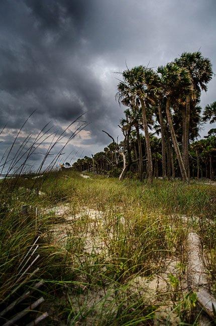 Hunting Island Palmetto Trees