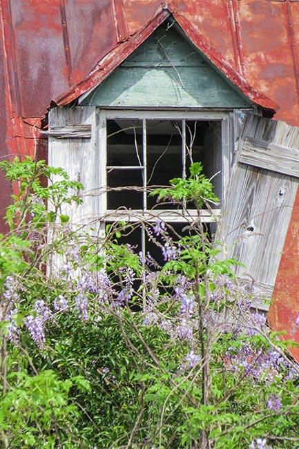 Hutchinson House Window