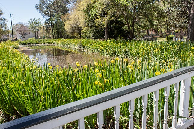 Iris Pond at St. Andrews Church