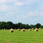 Hay Field in Joanna