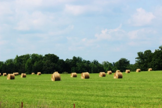 Hay Field in Joanna