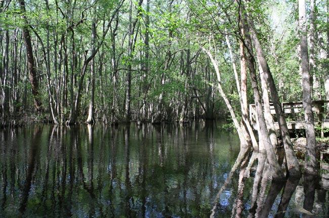 Kalmia Gardens Black Creek