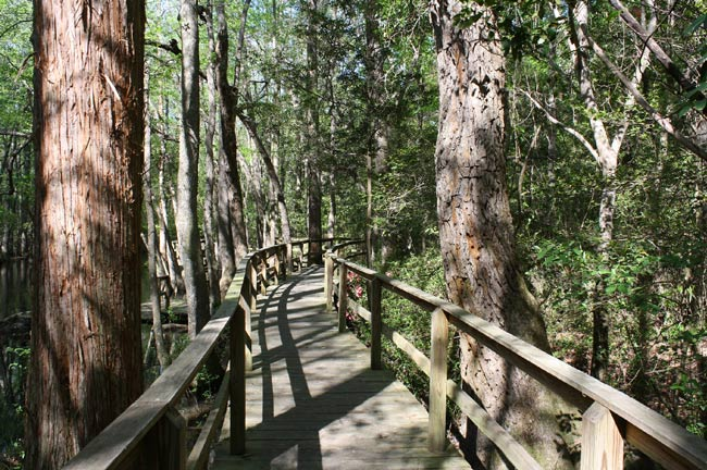 Kalmia Gardens Boardwalk
