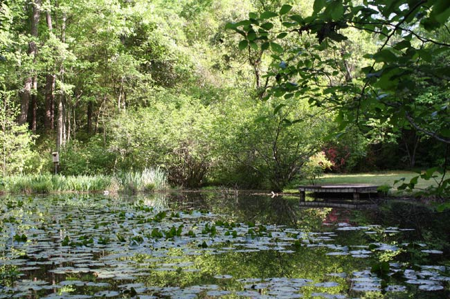 Kalmia Gardens Pond