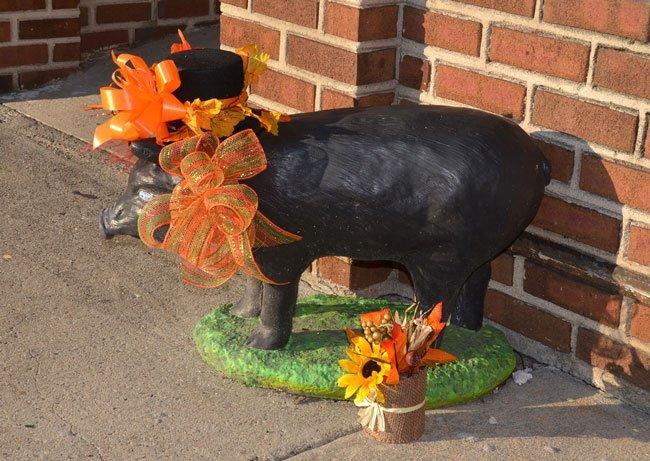 Kingstree Pig