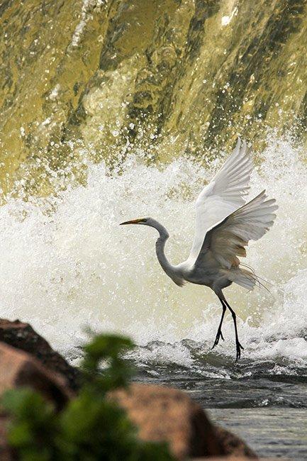Lake Murray Birding