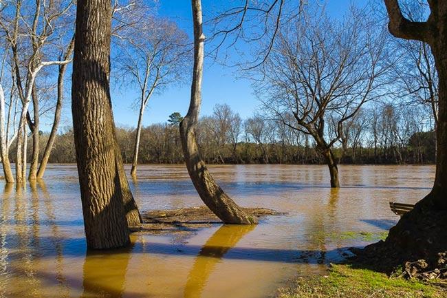 Laney Landing Cheraw County
