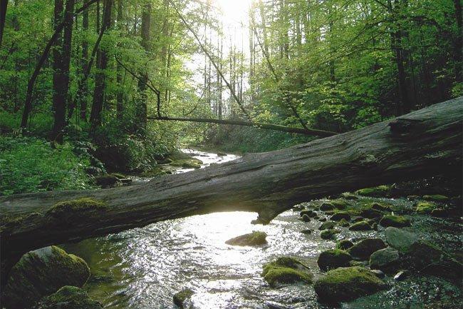 Laurel Fork Creek