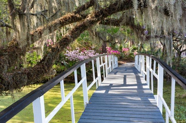 Magnolia Bridge View