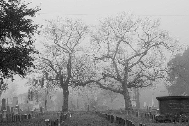 Magnolia Cemetery Trees