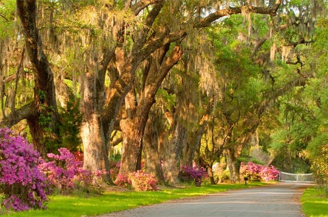 Magnolia Entrance