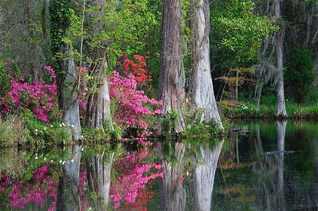 Magnolia Plantation And Gardens Charleston Sc Photos