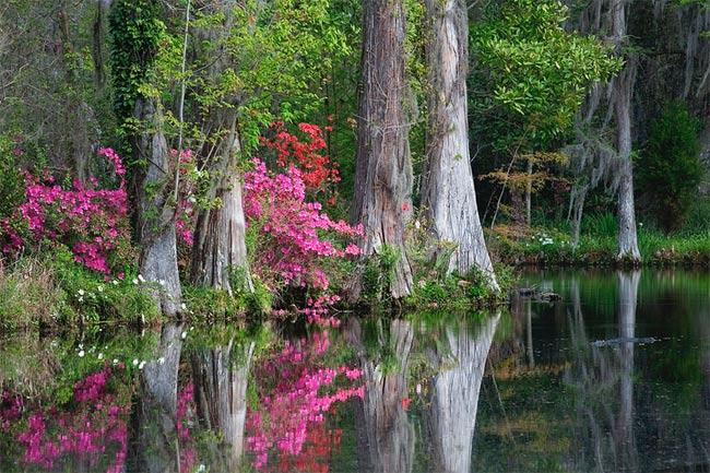 Magnolia Gardens Cypress Swamp