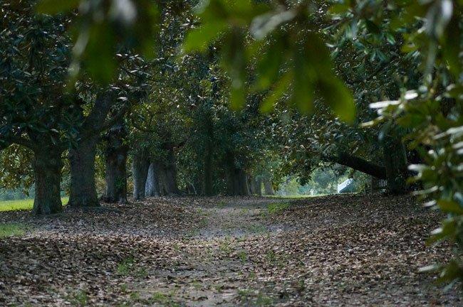 Magnolia Lane Redcliffe